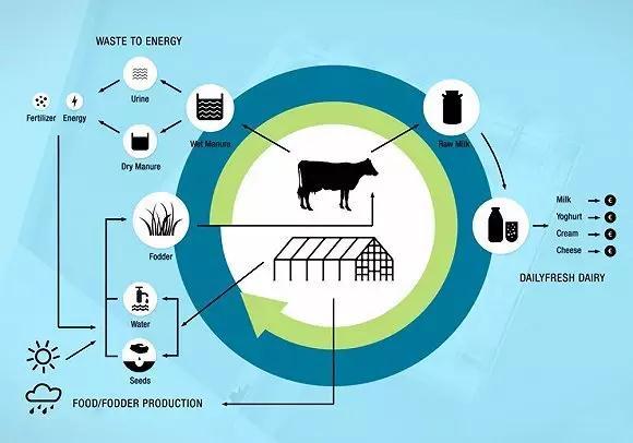 世界首个漂浮农场:机器人挤牛奶 LED灯种植草料