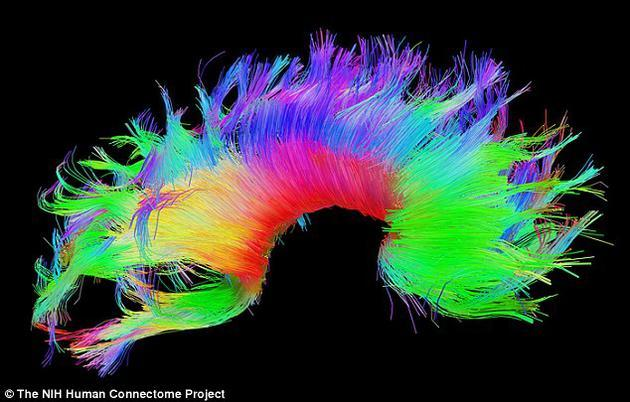 """生物识别新进展:大脑""""功能指纹"""",还将用于精神治疗"""