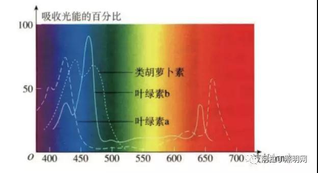 光质对植物生长发育的影响(上)