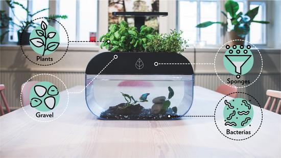 瑞典的团队研发智能鱼缸EcoGarden,种菜养鱼两不误