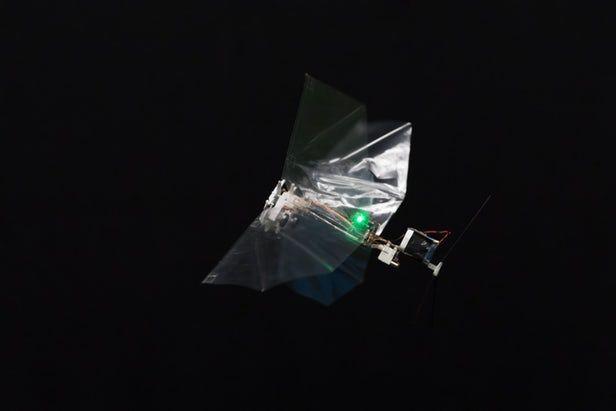 荷兰大学研制动作机敏的DelFly Nimble扑翼机器人