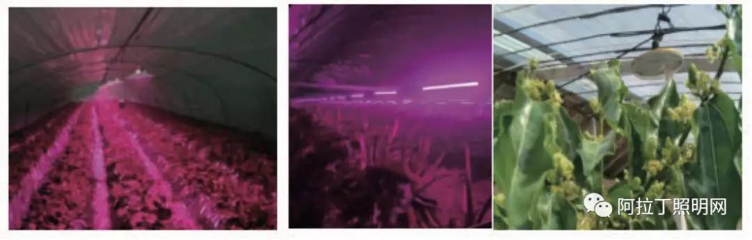 植物照明用户的应用现状