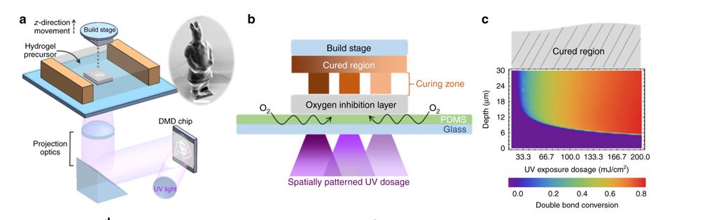 CU BOULDER研究人员应用3D打印技术创建硬化人造血管