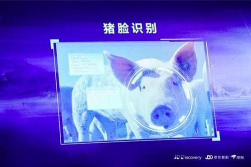 """京东开始进军养猪业 还推出了""""猪脸识别"""""""