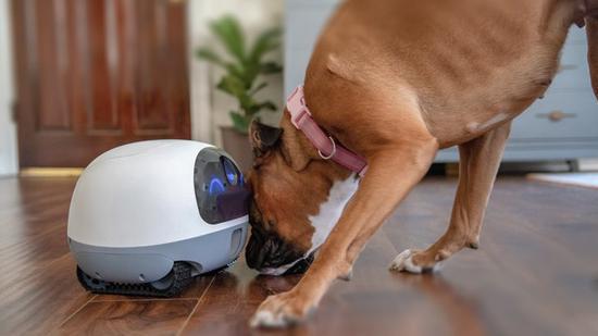 VAVA宠物机器人来了 可实现远程互动以及自动投食