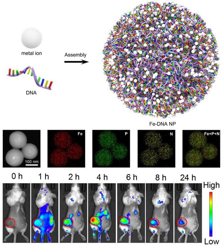 国家纳米中心DNA纳米生物技术研究取得进展