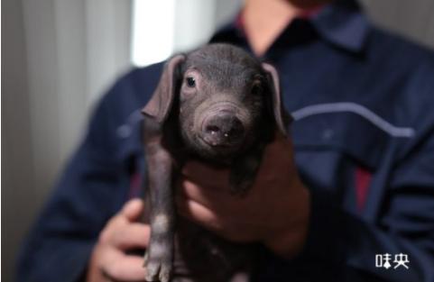 华为种地,阿里养猪 科技公司搞养殖都缺不了AI