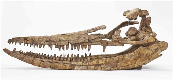 CT扫描+3D打印再现2亿年前的海怪头骨