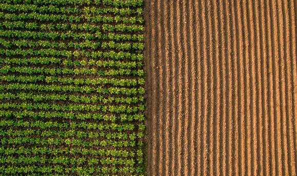 光传感器帮助种植者确保农作物健康生长