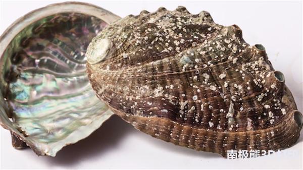 美国陆军研究3D打印陶瓷防弹衣 模仿鲍鱼壳机构