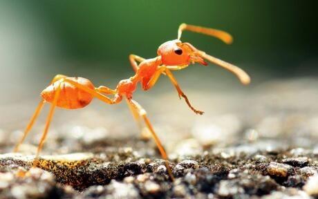 法国开发六足机器人AntBot 借鉴蚂蚁导航方式