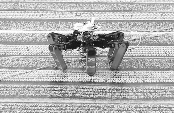 没有GPS怎么办?机器人借助传感器像蚂蚁那样回家