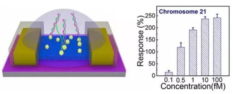 北京大学研发新型生物传感器 用于筛查唐氏综合症