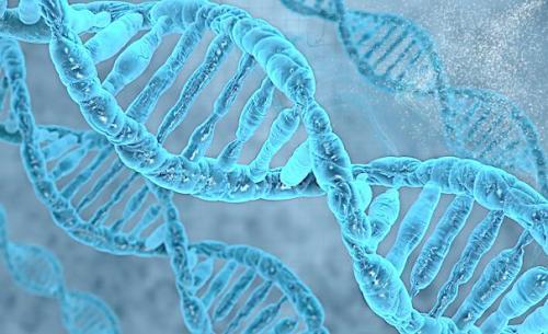 人类再次扮演上帝?科学家首次合成含8个碱基的DNA