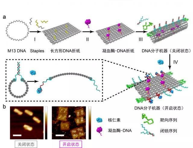 2018年度中国科学十大进展正式发布 DNA纳米机器人上榜