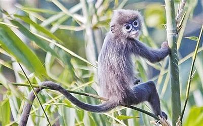 """智慧在线观测系统 """"无声""""守护珍稀野生动物"""