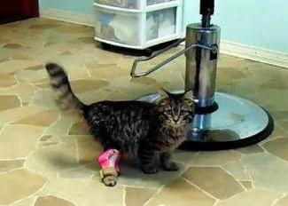 残疾猫咪通过3D打印假肢实现正常行走