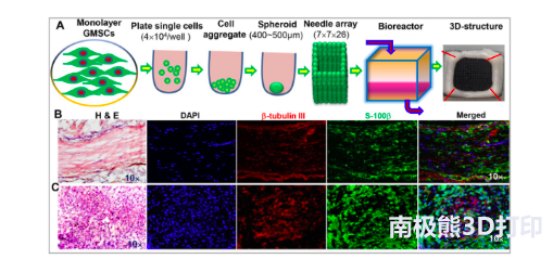 3D生物打印无支架神经结构促进大鼠面神经再生