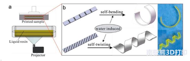 3D打印形状复杂且变形可控的水凝胶结构