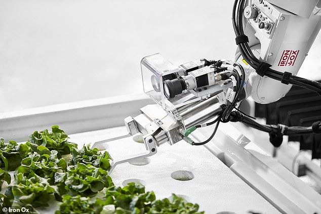 美农业公司开售机器人种植蔬菜
