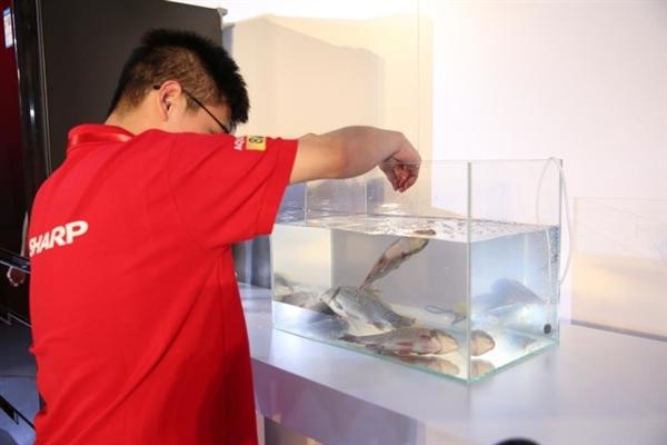 夏普发布急速冷冻冰箱:活鱼冻至-40℃遇水复活
