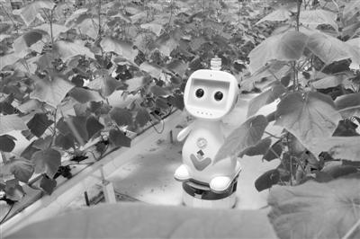 福建首款人工智能农业机器人正式应用