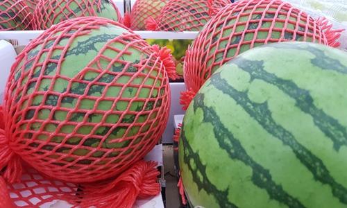 隔夜西瓜还能吃?检测仪器教你如何健康吃瓜