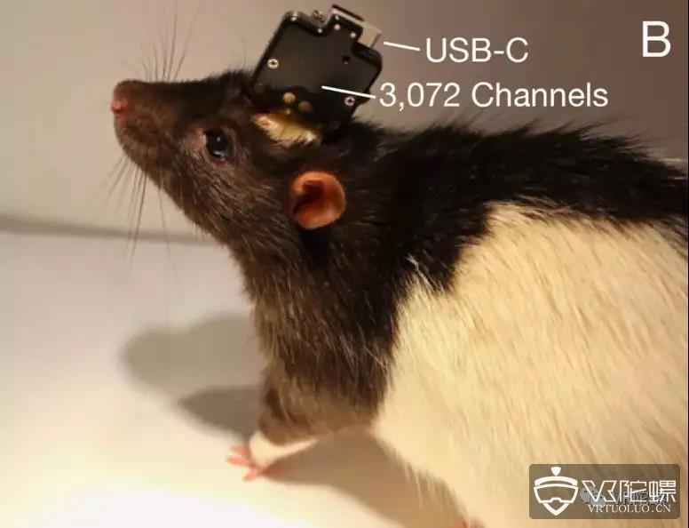 马斯克的黑客帝国:脑机技术将于明年进行人体试验