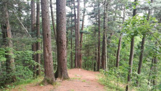 我国新增3条国家森林步道?全程3466公里
