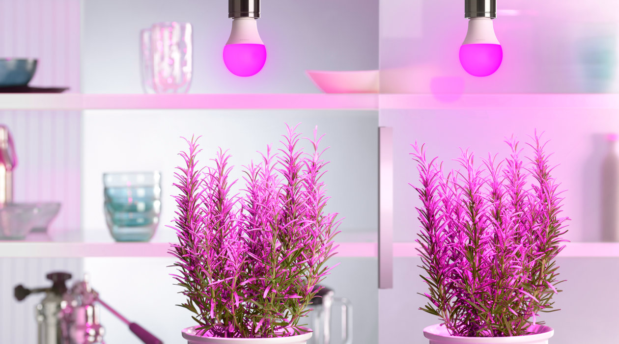 紫光的力量助力植物照明