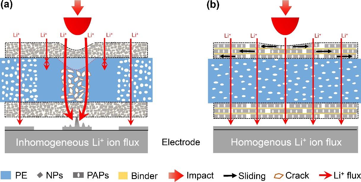 中国科大构建仿珍珠母层隔膜提升锂电池抗冲击性能