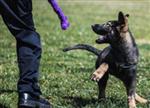首只警用克隆犬入警