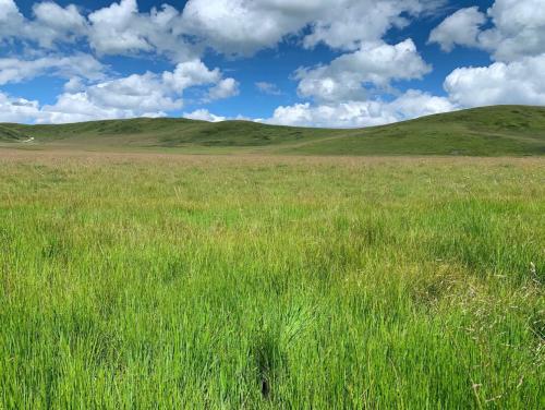 极飞农业无人机给草原复绿,效果喜人