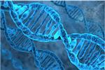 伯爾尼大學科研人員:一周內可人工合成新冠病毒