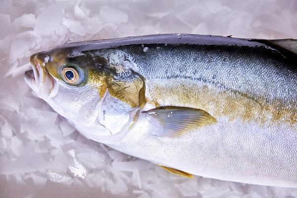 昕诺飞助力Kingfish公司向环境友好型水产养殖企业加速转型