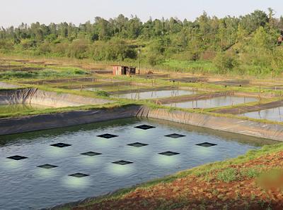 昕诺飞全新水产养殖照明产品利用太阳能促进鱼类生长并提高饲料转化率