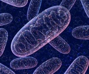 线粒体DNA突变,提高癌症生存率?