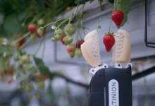 摘草莓机器人,3秒1颗不在话下