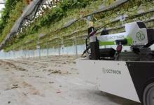 机器人能用机器视觉摘草莓