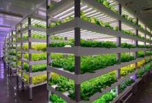 植物工厂促LED照明发展 成产业链重要一隅
