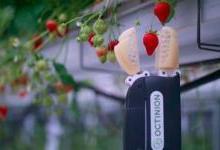 Octinion草莓采摘机器人可以每三秒采摘一个浆果