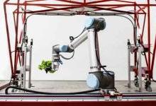 种菜机器人样样精通 成本和传统种植一样低