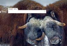 微软推出中文Bing搜索引擎 威胁到谷歌?