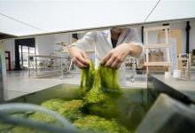 用藻类植物作为原材料制3D打印耗材