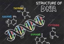 DNA工程化纺织材料能否成为未来的风口