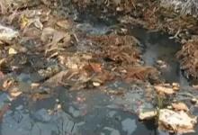 诸暨惊现万吨垃圾 钱塘江水质受威胁