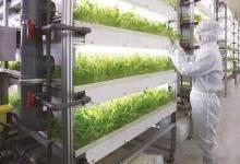 京东携手三菱化学要自己种菜自己卖