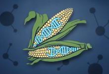未来人类可以用CRISPR技术来做什么?