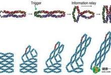 DNA机器或可用来制造纳米传感器