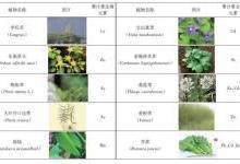 重金属污染现状及国内外植物修复技术发展